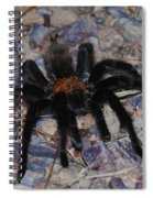 And Along Came A Little Spider .  Spiral Notebook
