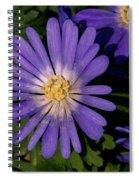 Anemone Blanda Blue Spiral Notebook