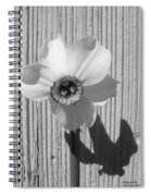 Angel Eyes Narcissus Spiral Notebook