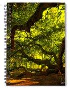 Angel Oak Limbs Crop 40 Spiral Notebook