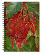 Angel On The Wing Spiral Notebook