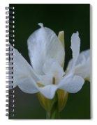 Angel Wings Iris Spiral Notebook