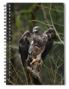 Angle's Wings Spiral Notebook