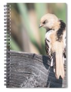 Angry Bird Bearded Reedling Juvenile Spiral Notebook