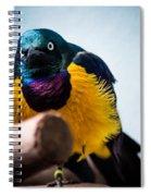 Angry Sunbird Spiral Notebook