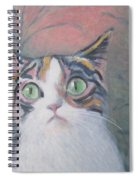 Anguish Of A Cat Spiral Notebook