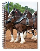 Anheuser Busch Budweiser Clydesdale Horses In Harness Usa Rodeo Spiral Notebook