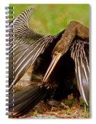 Anhinga Anhinga Anhinga Preening Spiral Notebook
