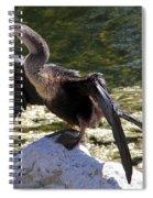 Anhinga Female Spiral Notebook