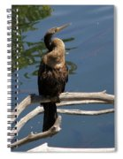 Anhinga Immature Spiral Notebook