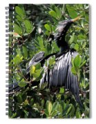 Anhinga Male Spiral Notebook