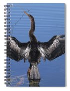 Anhinga  Sunbathing Spiral Notebook