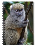 Animals 21 Spiral Notebook