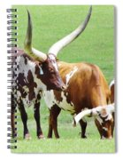 Ankole And Texas Longhorn Cattle Spiral Notebook