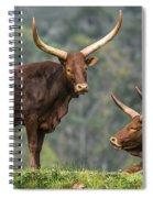 Ankole Longhorns Spiral Notebook