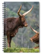 Ankole Longhorn 2 Spiral Notebook
