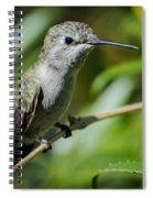 Anna Hummingbird Spiral Notebook