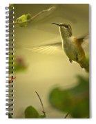 Rufus  Humming Bird  Spiral Notebook