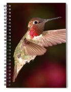 Anna's Hummingbird And The Roses Spiral Notebook