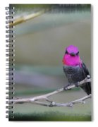 Anna's Hummingbird - Male Spiral Notebook