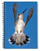 Anna's Hummingbird Tail Display Spiral Notebook