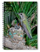 Annas Hummingbird With Young Spiral Notebook