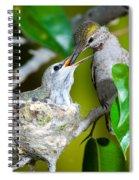 Annas Hummingbirds At Nest Spiral Notebook
