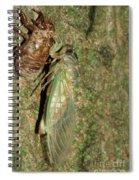 Annual Cicada Spiral Notebook