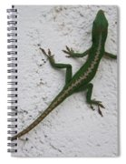Anole On Stucco Spiral Notebook