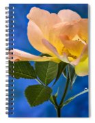 Another Beautiful Rose Spiral Notebook