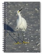 Another Flying Fish Spiral Notebook