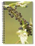 Ant Farm Spiral Notebook