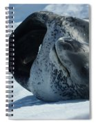 Antarctic Leopard Seal On Iceberg Spiral Notebook