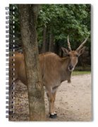 Antelope Behind A Tree Spiral Notebook