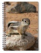 Antelope Ground Squirrel Spiral Notebook
