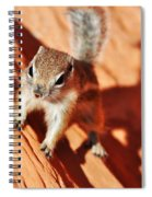 Antelope Ground Squirrel Spiral Notebook
