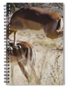 Antelope Leap  Spiral Notebook