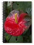 Anthurium Flamingo Flower Beauty Queen Fine Art Photography Print Spiral Notebook