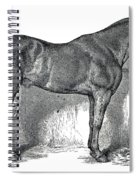 Antique Horse Drawing Spiral Notebook
