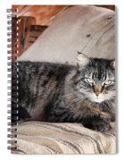 Antiquity Kitty Spiral Notebook