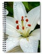 Antsy Spiral Notebook