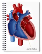 Aortic Valve Spiral Notebook