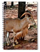 Aoudad Plus 2 Spiral Notebook