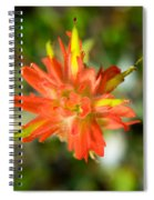 Apex Of Indian Paintbrush Spiral Notebook