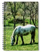 Appaloosa In Pasture Spiral Notebook