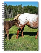 Appaloosa Mamma And Baby Spiral Notebook