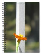 Appeal To Birds Spiral Notebook
