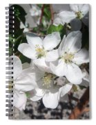 Apple Blossoms 2 Spiral Notebook