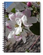 Apple Blossoms 3 Spiral Notebook