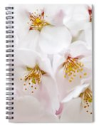 Apple Blossoms Spiral Notebook